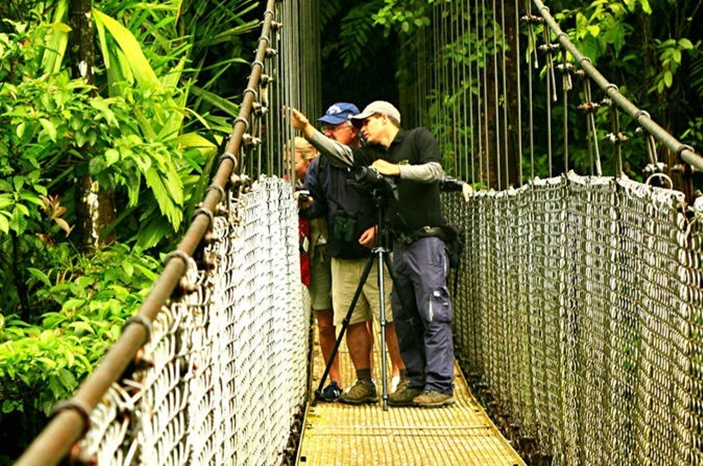 Arenal Volcano Hanging Bridges Tour
