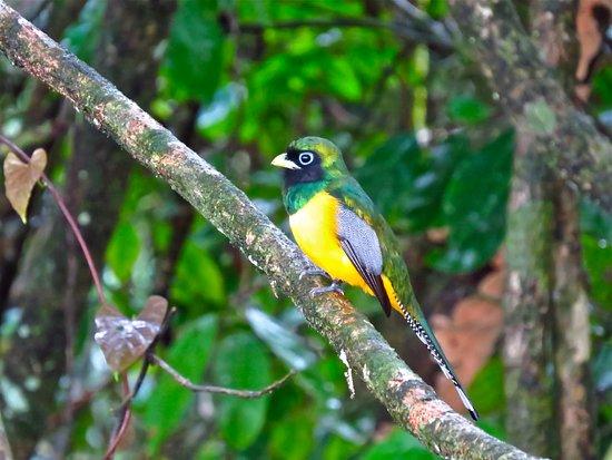 Birdwatching Arenal Volcano